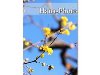 1041)「春の花 蝋梅、庭梅、水仙、桜、ハナカイドウ」 5枚組ポストカードの画像