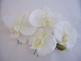 胡蝶蘭の髪飾りの画像