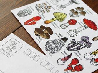 ●キノコ図鑑シリーズ● 15種類のキノコと毒きのこ ポストカード2枚セットの画像