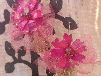 ピンクの八重桜風お花のピアスの画像