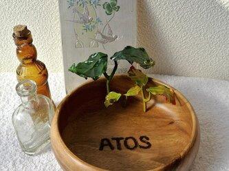 ATOSシリーズ 森の始まり小物入れ 2016-3の画像