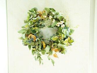 green spring wreath  20㎝の画像