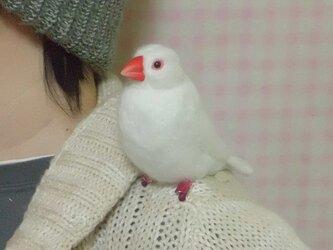 羊毛文鳥クリップ 文鳥 白文鳥☆クチバシの色相談可能 ♪の画像