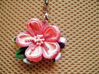 桜の花のチャーム(晴の桜)の画像