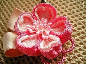 桜の花のチャーム(華の桜)の画像