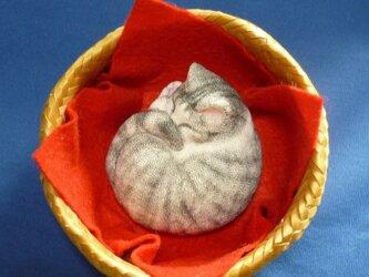 アンモニャイト サバ白猫ちゃん かごつきの画像