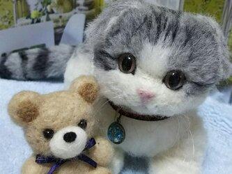 羊毛スコティッシュフォールド子猫の画像