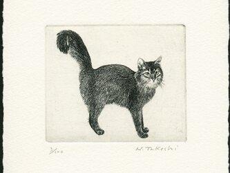 シッポの大きな猫 / 銅版画 (作品のみ)の画像