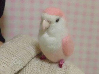 羊毛インコクリップ コザクラインコ ホワイトフェイスピンク の画像