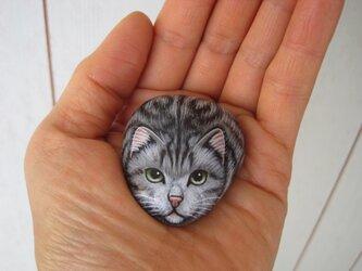石猫  「手乗りアメショ」の画像