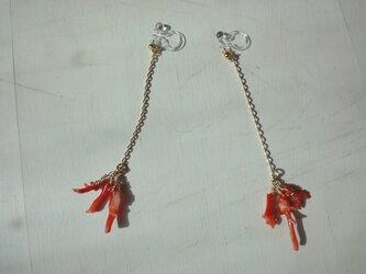 赤枝珊瑚のイヤリングの画像
