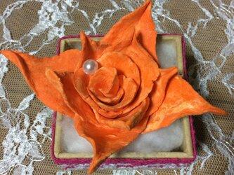 オレンジバラ2の画像