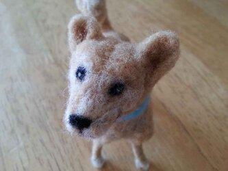 柴系mix犬の画像
