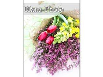 1056)エリカ(ヒース)、チューリップ、金魚草、ガーベラ 5枚組ポストカードの画像