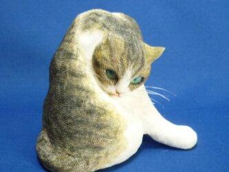 班猫 の画像
