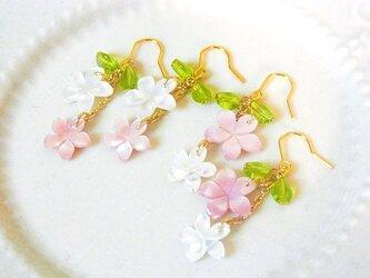 2色のサクラ咲くピアス(イヤリング変更可)の画像