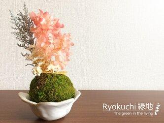お花見ブヒーちゃん<ピンクのあじさい・苔球置物>の画像