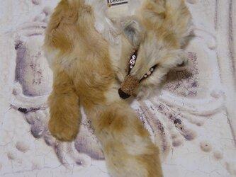 Fox muffler/Size:L#Vanilla latte/Eye:Rhinestoneの画像