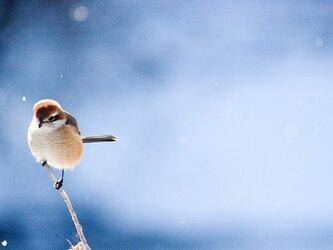小さな猛禽・Nature photo frameの画像
