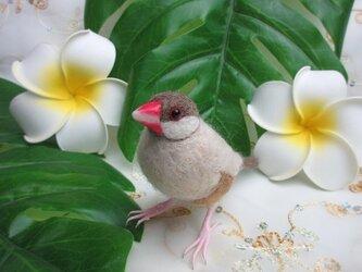 羊毛フェルト シナモン文鳥の画像