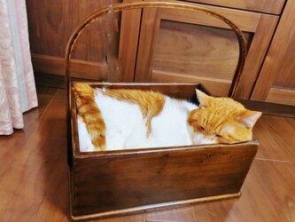 猫バスケット #026の画像
