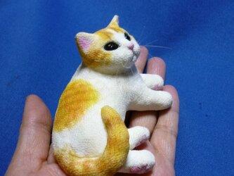 手乗り猫 白茶トラ猫さんの画像