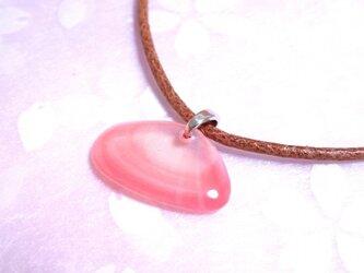 【再販】桜貝のチョーカー・1枚貝(両面タイプ)の画像