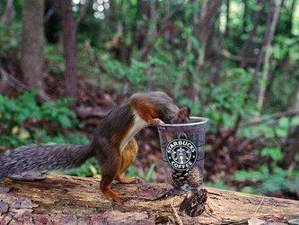 コーヒーブレイク・Nature photo frameの画像