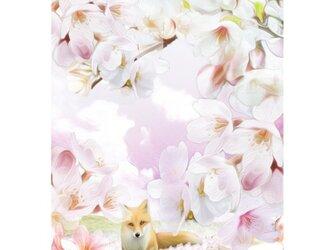 桜 2Lサイズ の画像