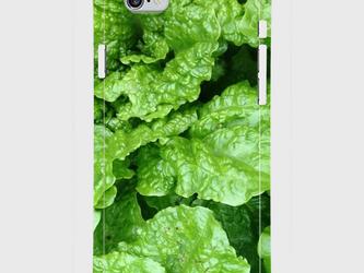 【送料無料】iPhone6/6sスマホケース レタスの画像