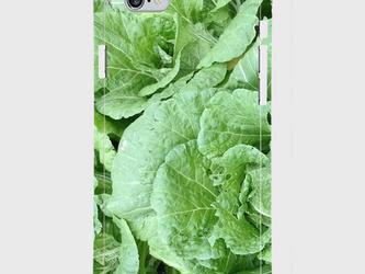【送料無料】iPhone6/6sスマホケース 白菜の画像
