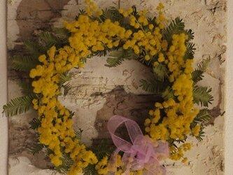 白樺の森のミモザリース(サークルL)の画像