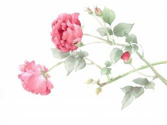 ROSEの画像
