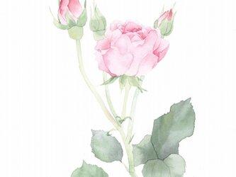 ROSE【pink】の画像