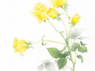 ROSE【yellow】の画像
