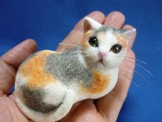 手乗り猫 見返り箱猫 三毛ちゃんの画像