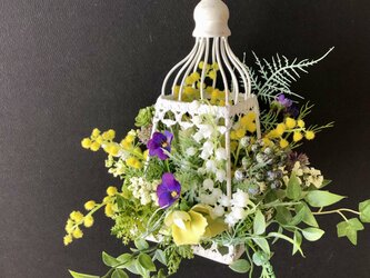 Lantern arrange mimosaの画像