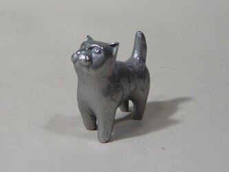 うわむきネコの画像