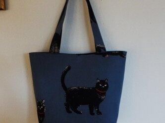 ブルーグレイの黒猫トートの画像