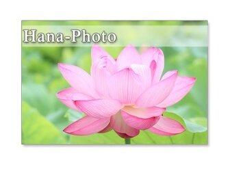 1071) あでやかな蓮の花  5枚組ポストカードの画像