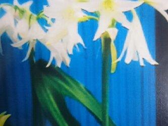 花のポストカード  フラワー   雑貨  写真  はがき  文具の画像