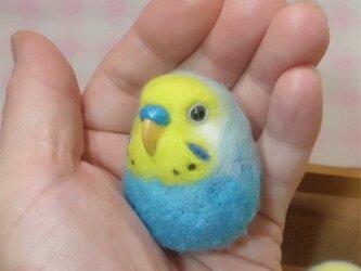 セキセイインコ レインボー・水色系 羊毛フェルト 小鳥マカロン(?)選べる2タイプ(マグネットまたはブローチ)【受注製作】の画像