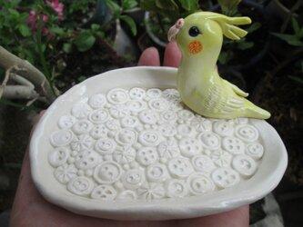 動物・ボタン模様皿<大>(オカメインコ)の画像