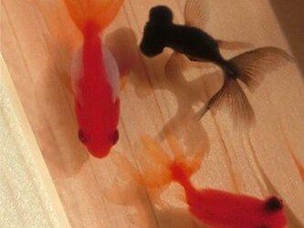 金魚アート 3D金魚 「祭」純日本製 東濃桧 プレゼント 贈り物 誕生日 結婚祝い 退職 還暦祝い 男性 女性 夏 お中元 金魚の画像