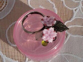 桜のリングⅡの画像