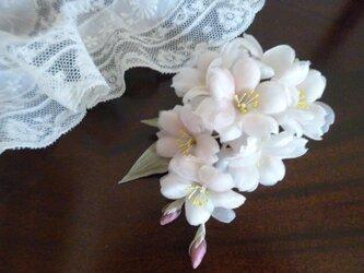 染め花 シルクの桜*花枝のコサージュの画像