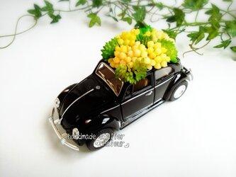 菜の花畑のようなブラックビートル!ミニカーフェイク多肉植物の画像