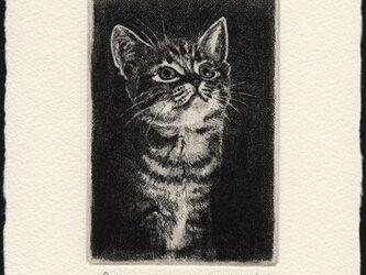 見上げる子猫 ・ A/ 銅版画 (額なし)の画像