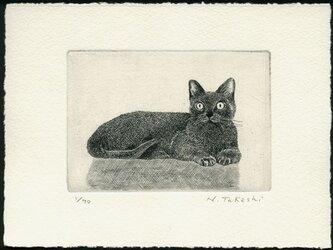 くつろぐ猫 / 銅版画 (作品のみ)の画像