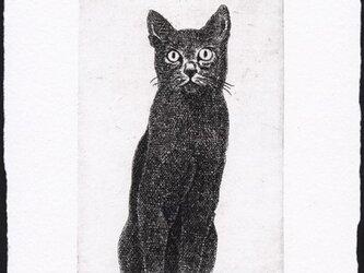 黒い猫・2009/銅版画 (作品のみ)の画像